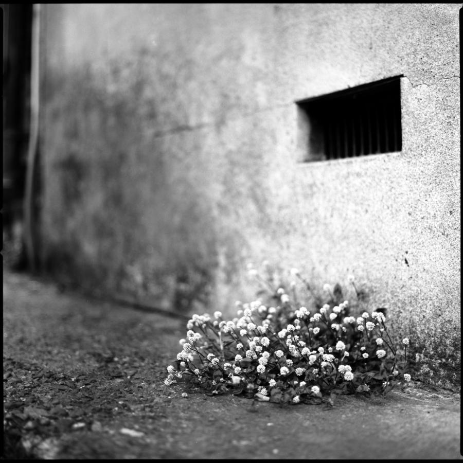 コンクリートの隙間から咲く花