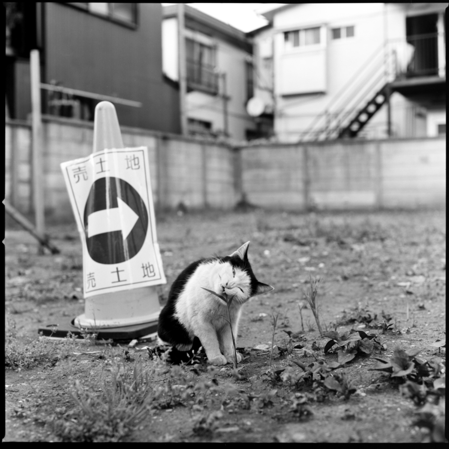 売地にいた猫が草を食べているところ