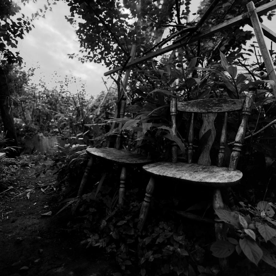 藪の中の椅子