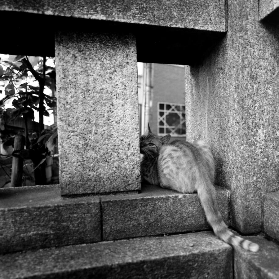 花園神社の猫
