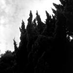 住宅街【常緑樹、葉、けむしの遊具など】 with HASSELBLAD SWC
