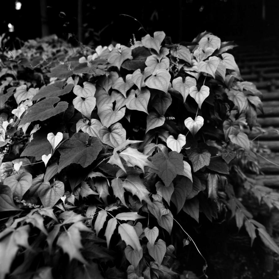 生い茂る葉