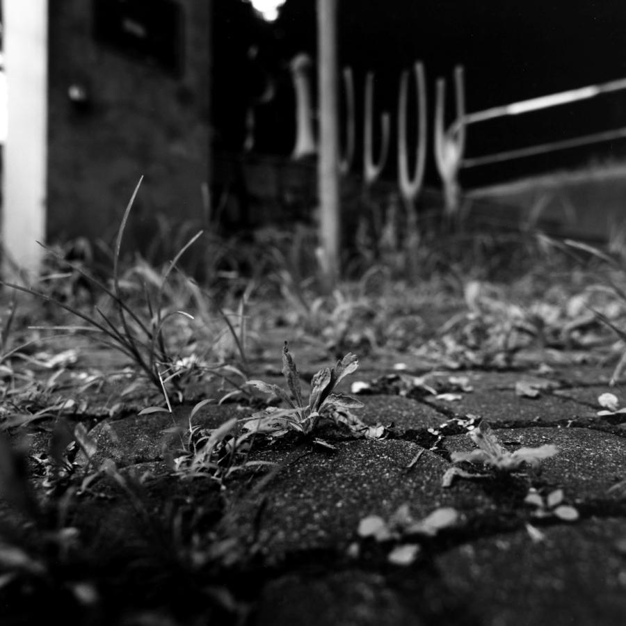 石畳の隙間から生えた草