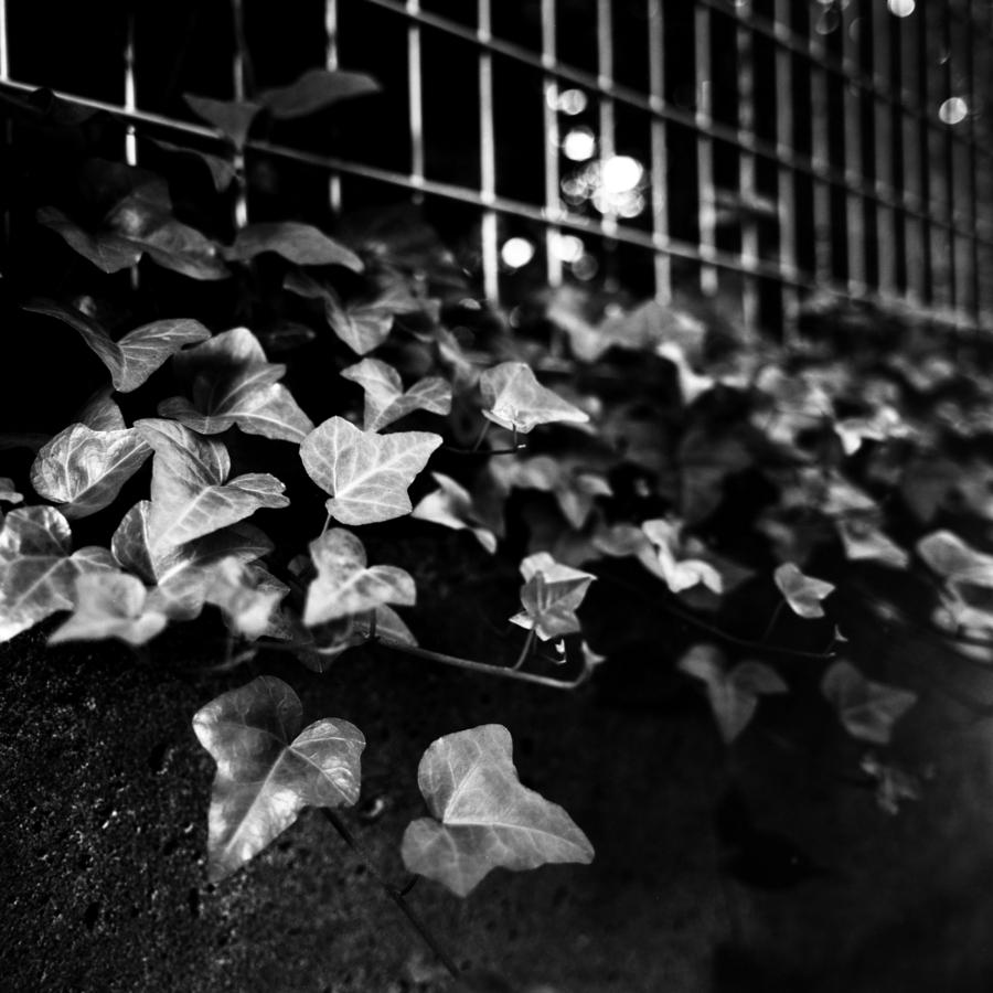 フェンス際の葉
