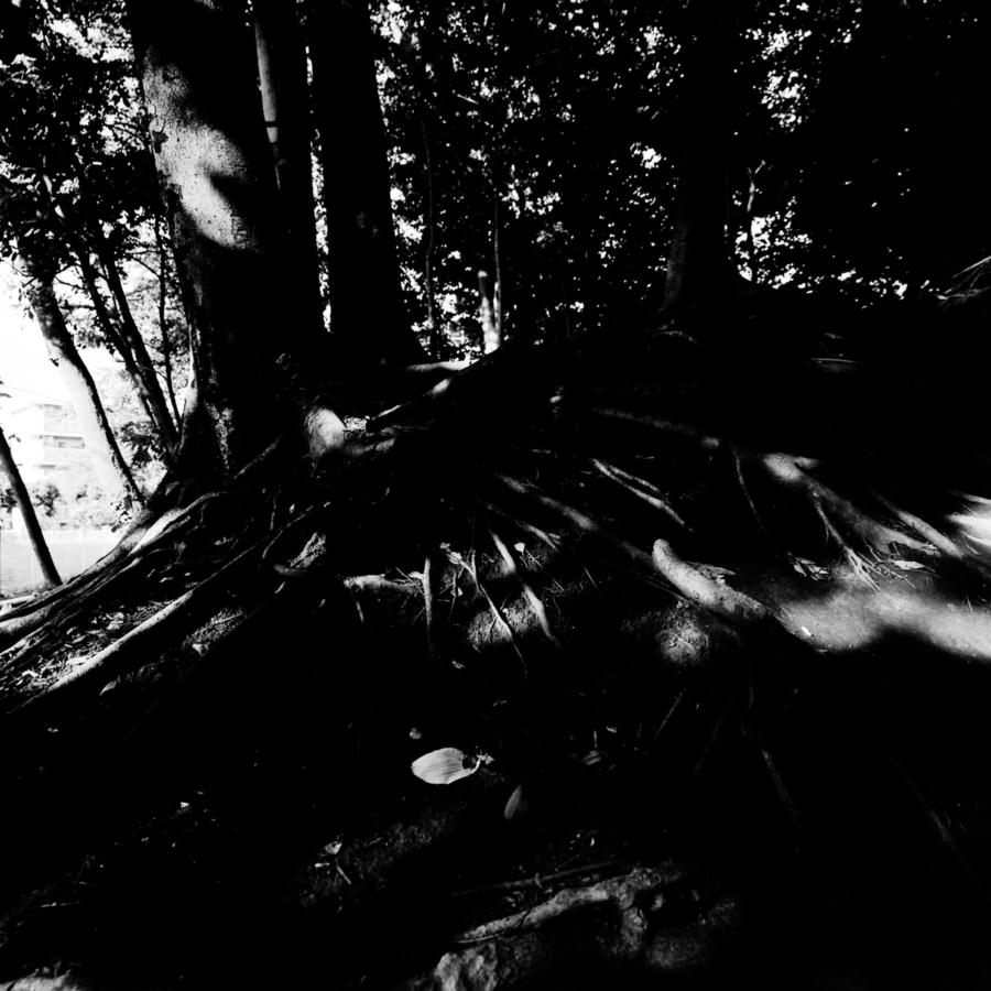 広がる木の根