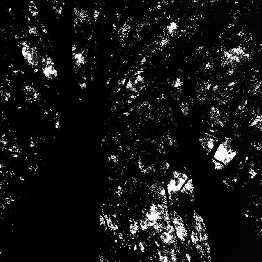 お寺の大樹