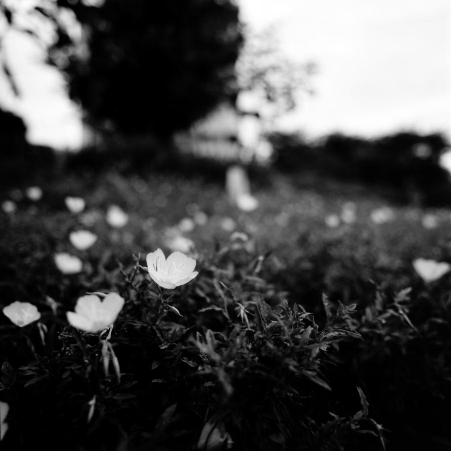 花の静けさ