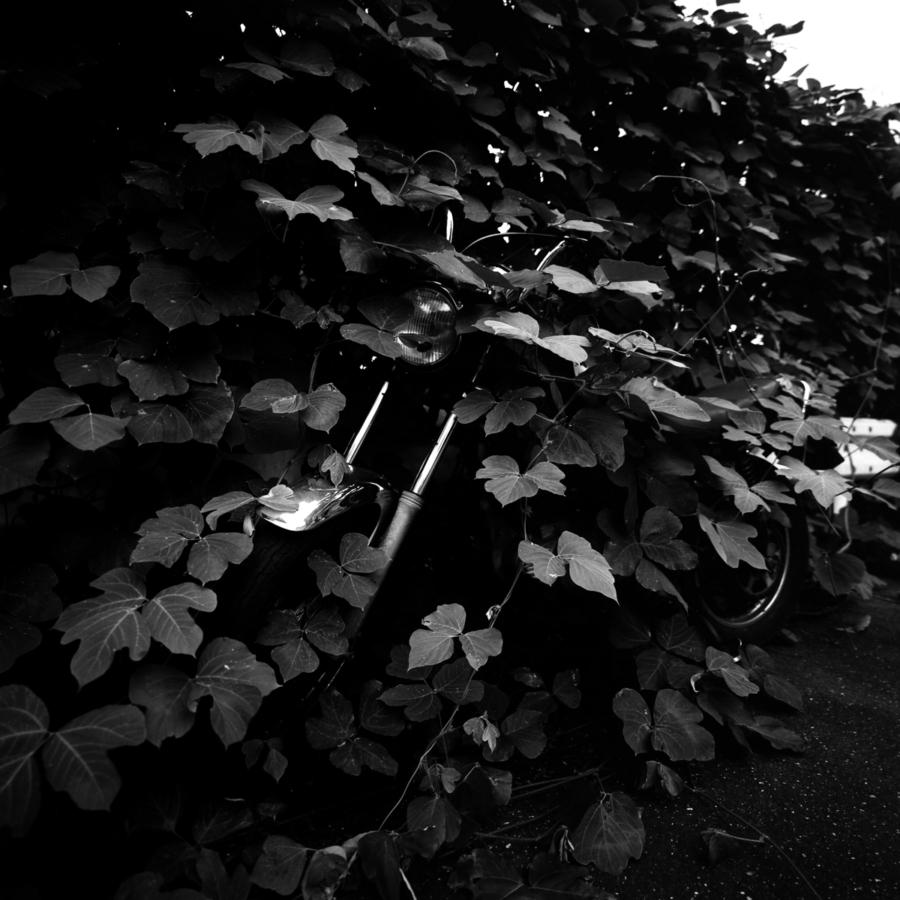 葉に埋もれたバイク