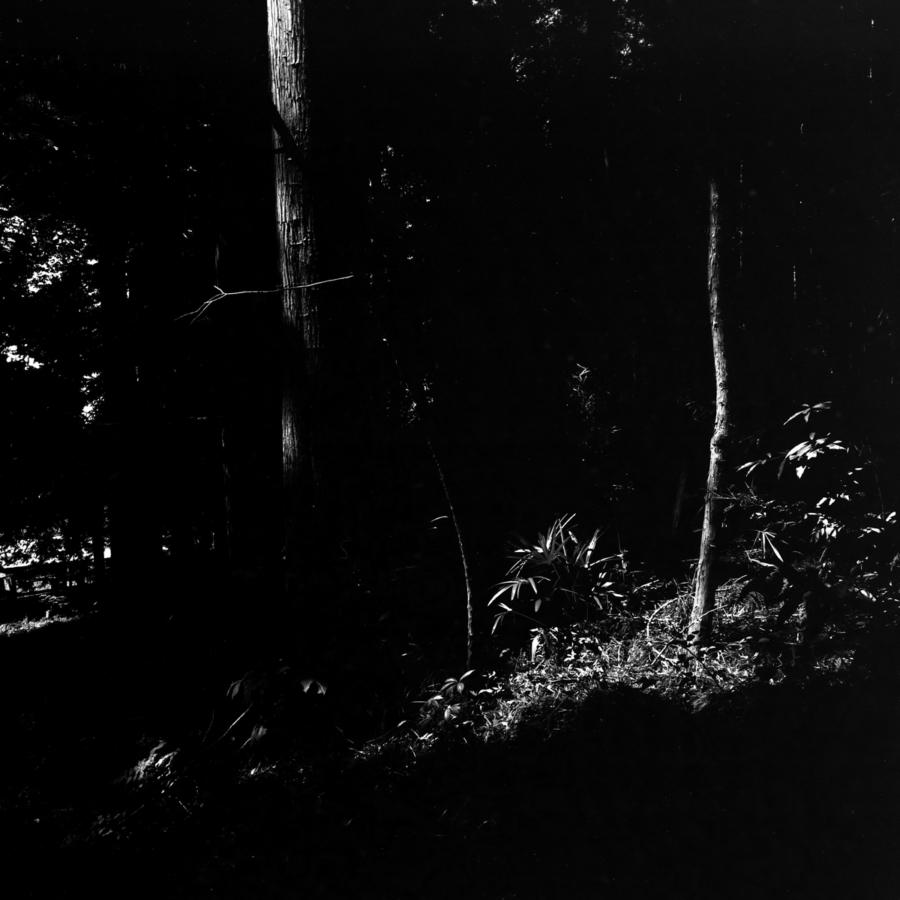 裏山の杉林の中