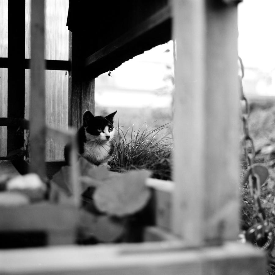 遠くを見つめる子猫