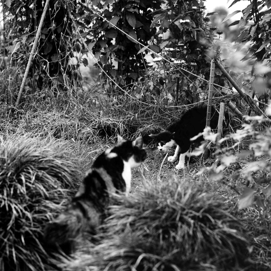 三毛猫と対峙する子猫