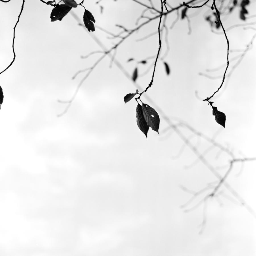 枝先の枯れ葉