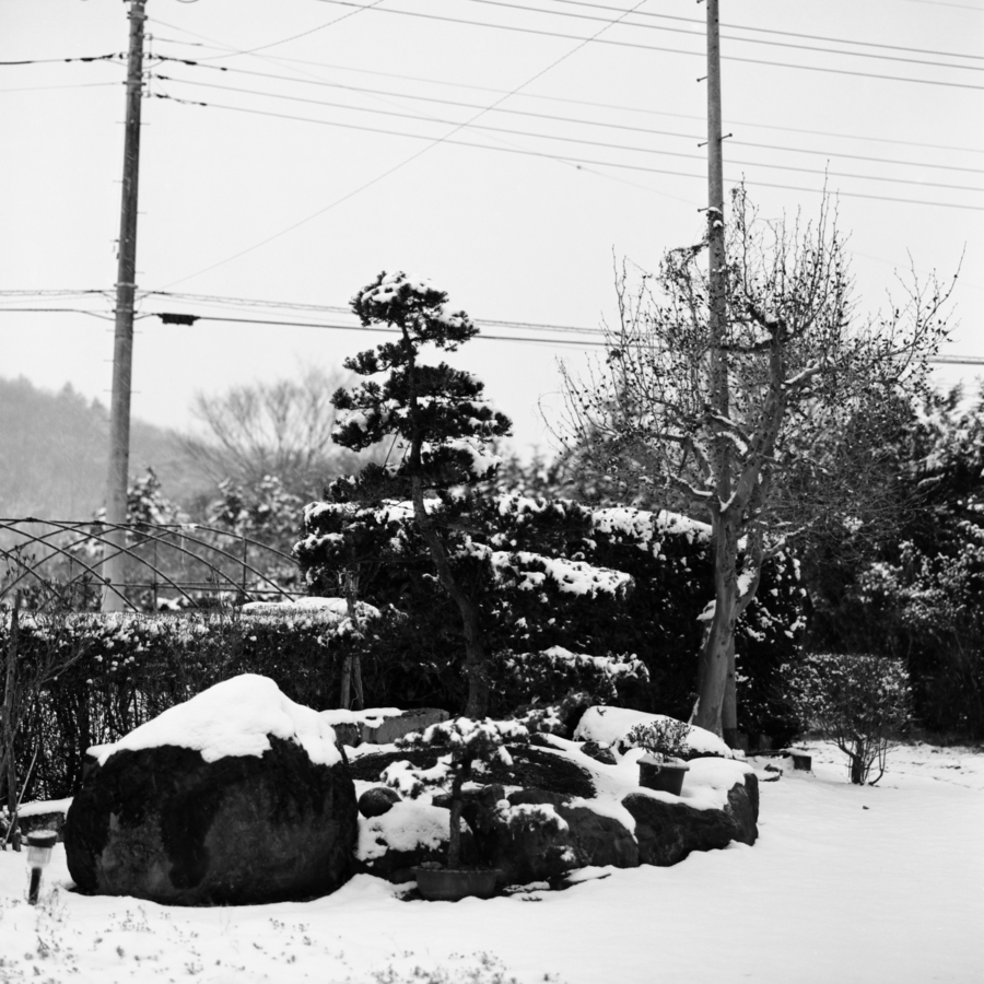 雪の積もった庭