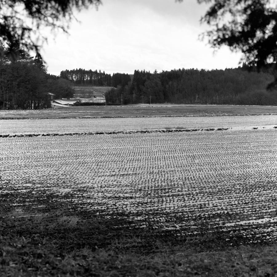 雪の積もった田んぼ