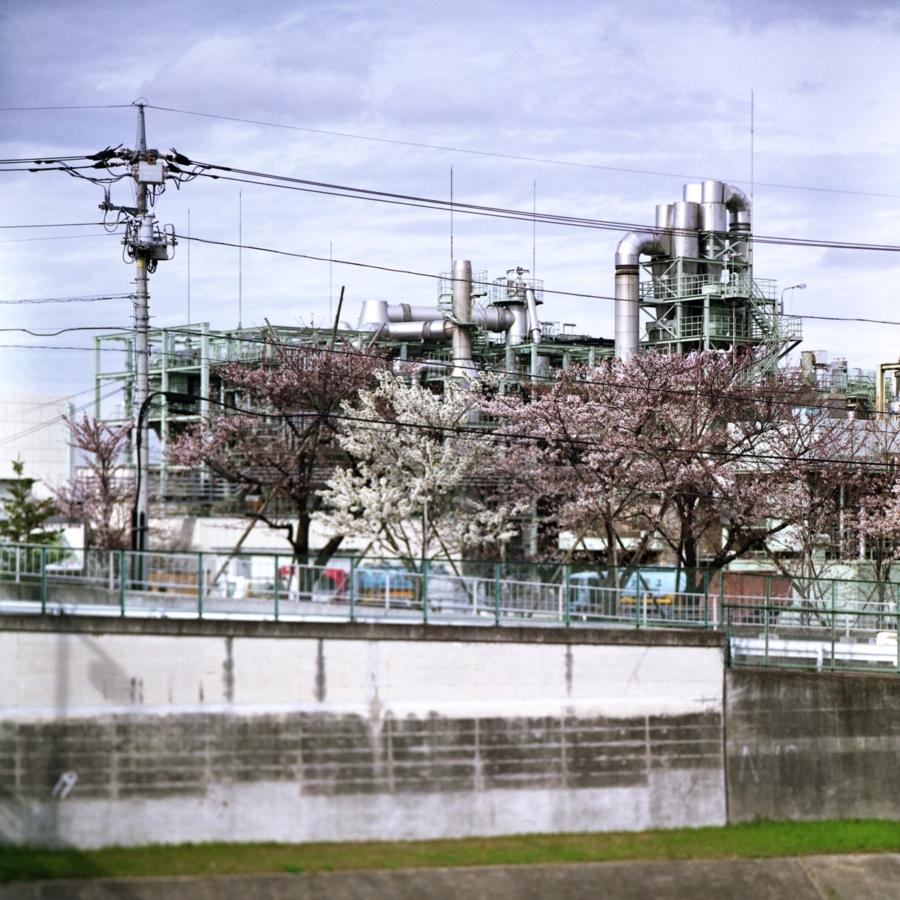 水循環センターと桜