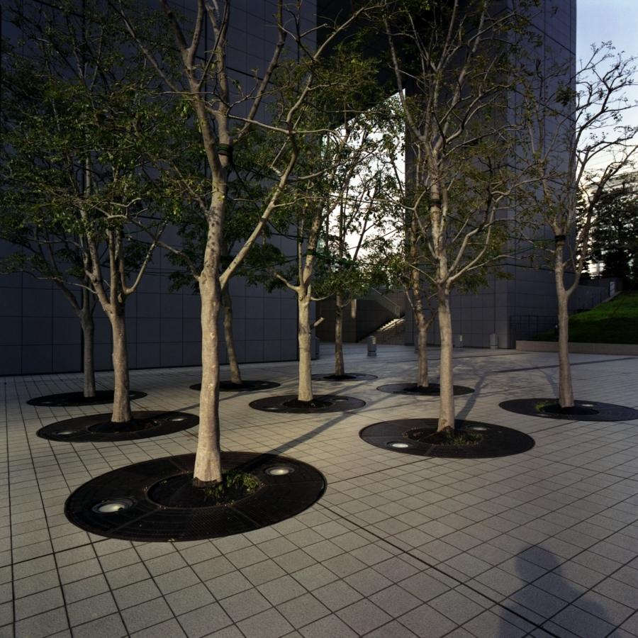新宿サザンテラスの木