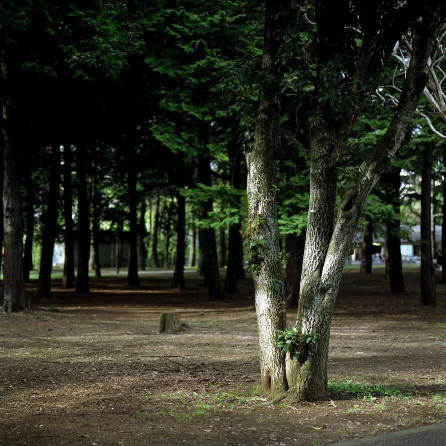 光の当たった木