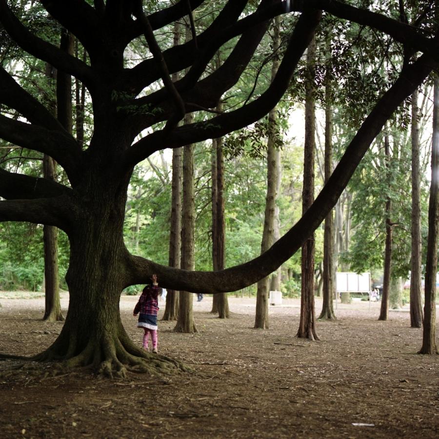 大きな木の枝と少女