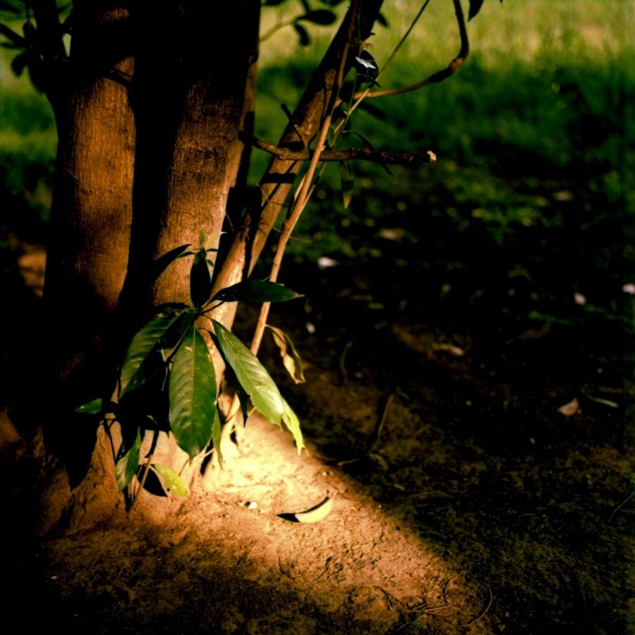 木の根元に差し込む光