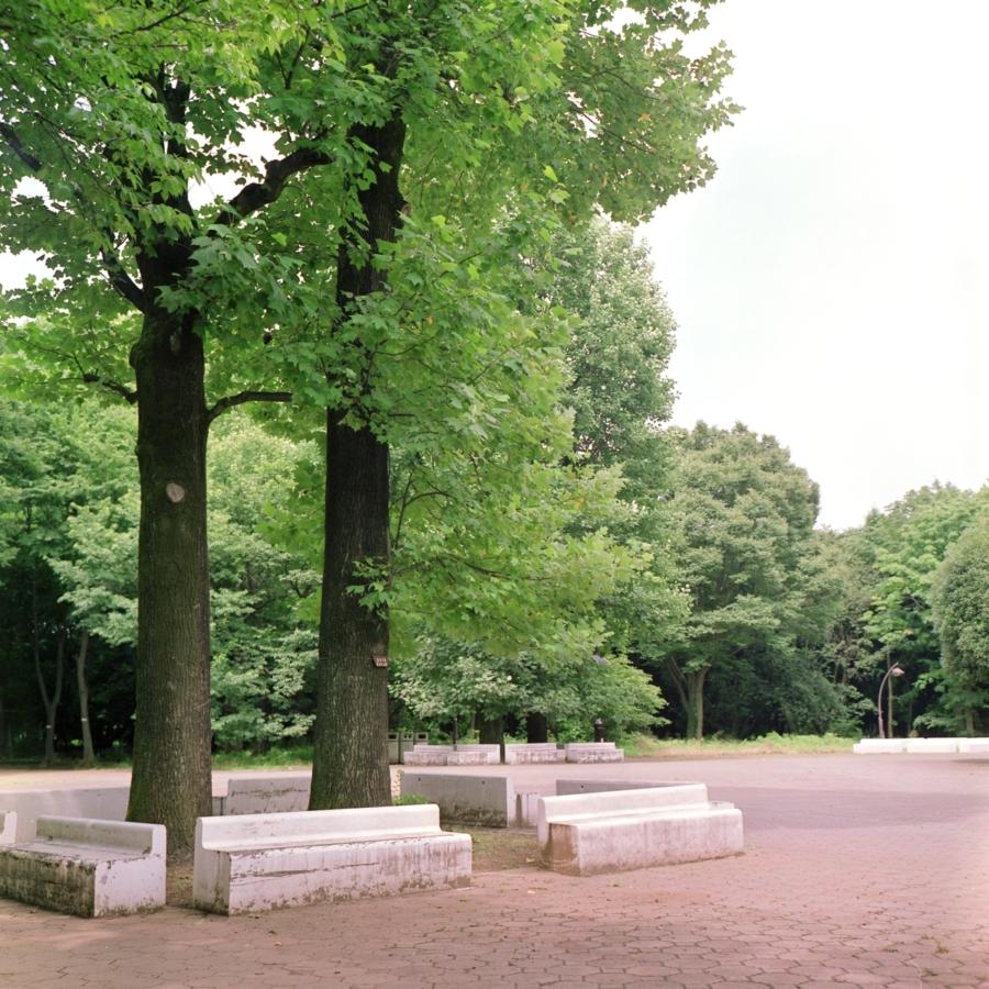 光が丘公園 木の下にあるコンクリート製のベンチ