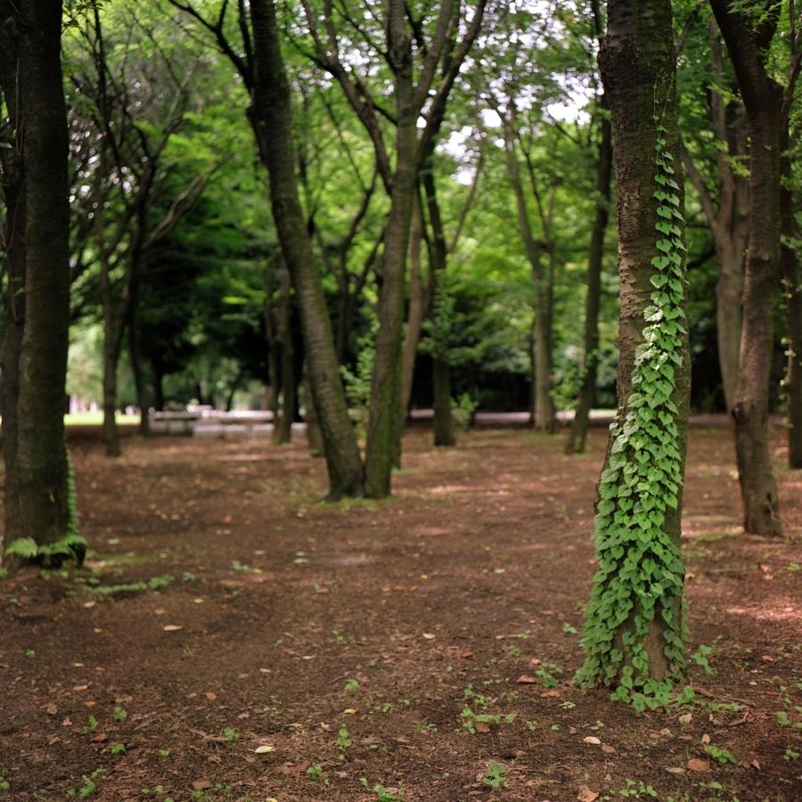 光が丘公園 憩いの森 木に絡みつく葉