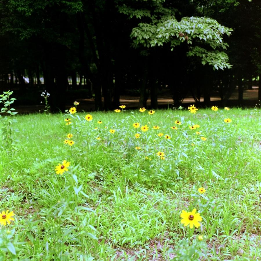 光が丘公園の花