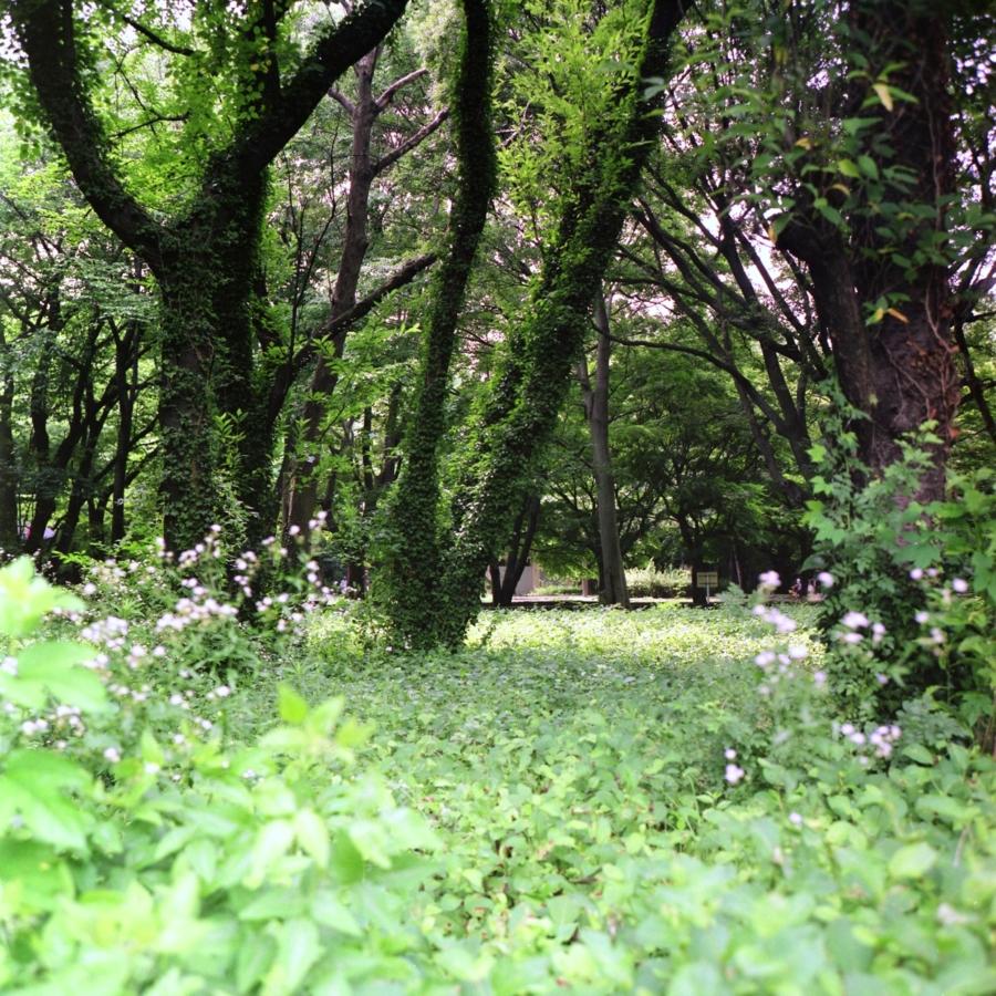 光が丘公園 憩いの森