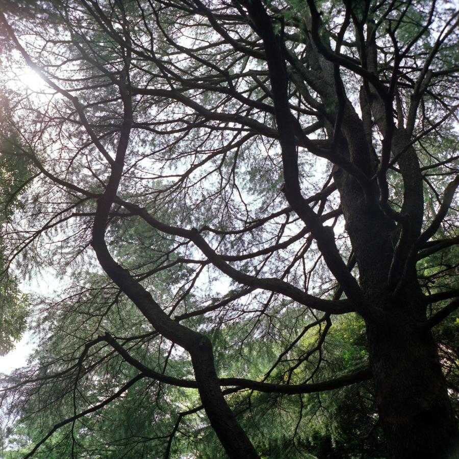 光が丘公園 木漏れ日