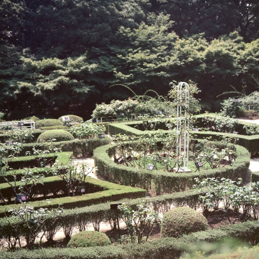 旧古河庭園 西洋庭園