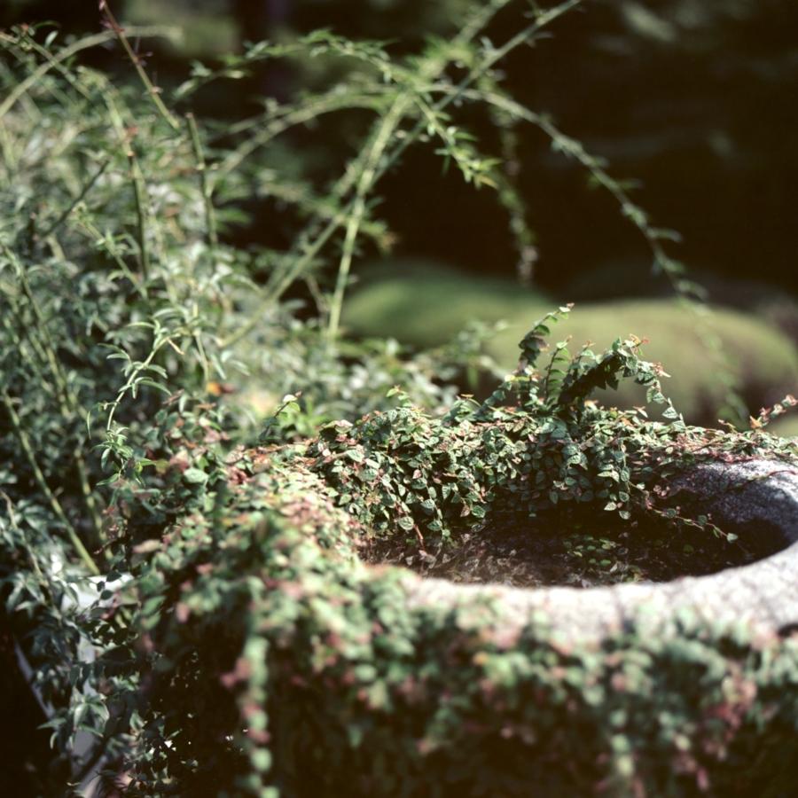 旧古河庭園 西洋庭園 石の器の置物