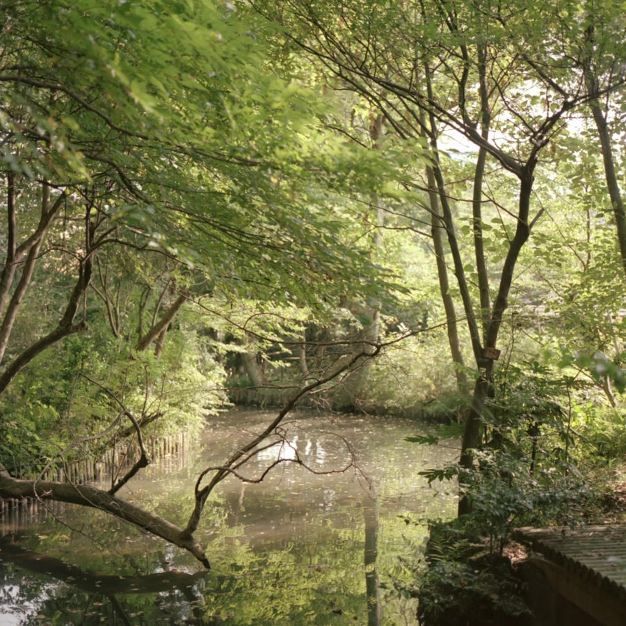 実篤公園 下の池