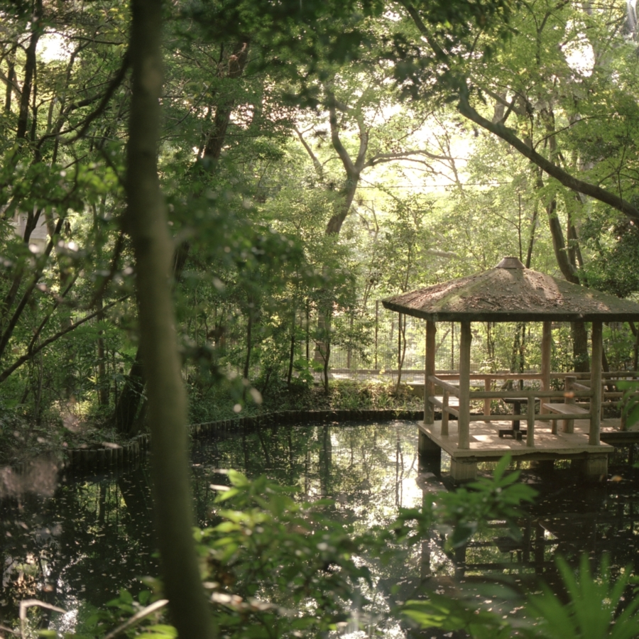 実篤公園 上の池