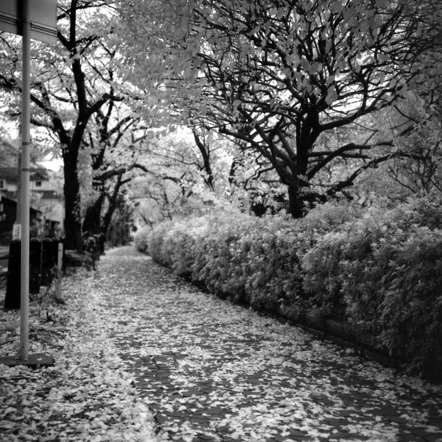 歩道 植え込み 落ち葉