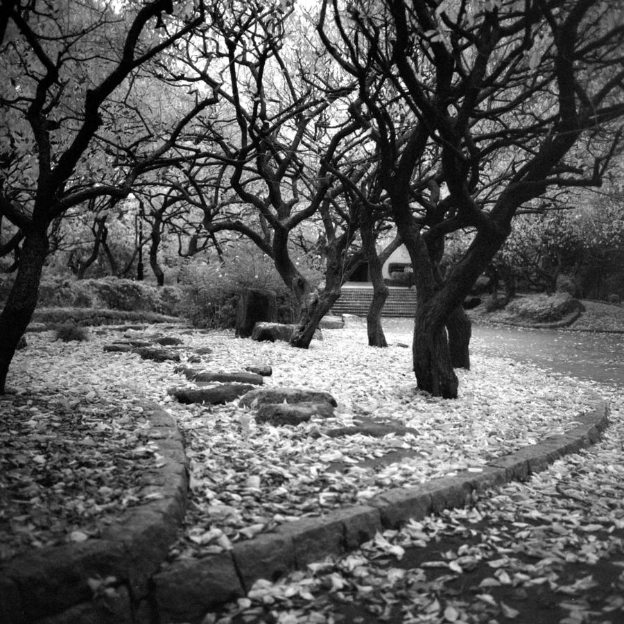 公園 落ち葉