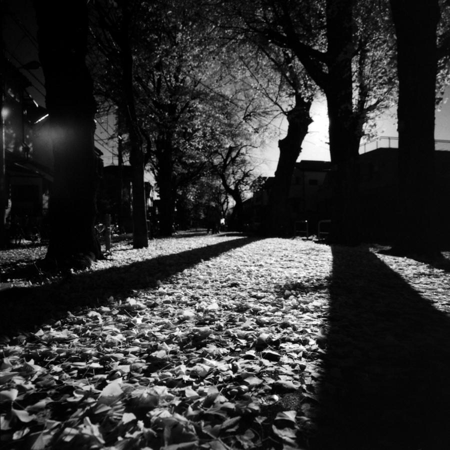 落ち葉 木の影