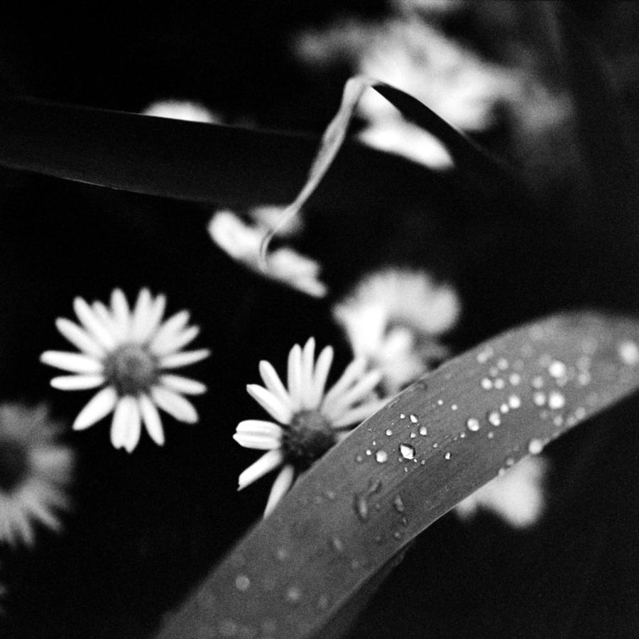 花と葉と露
