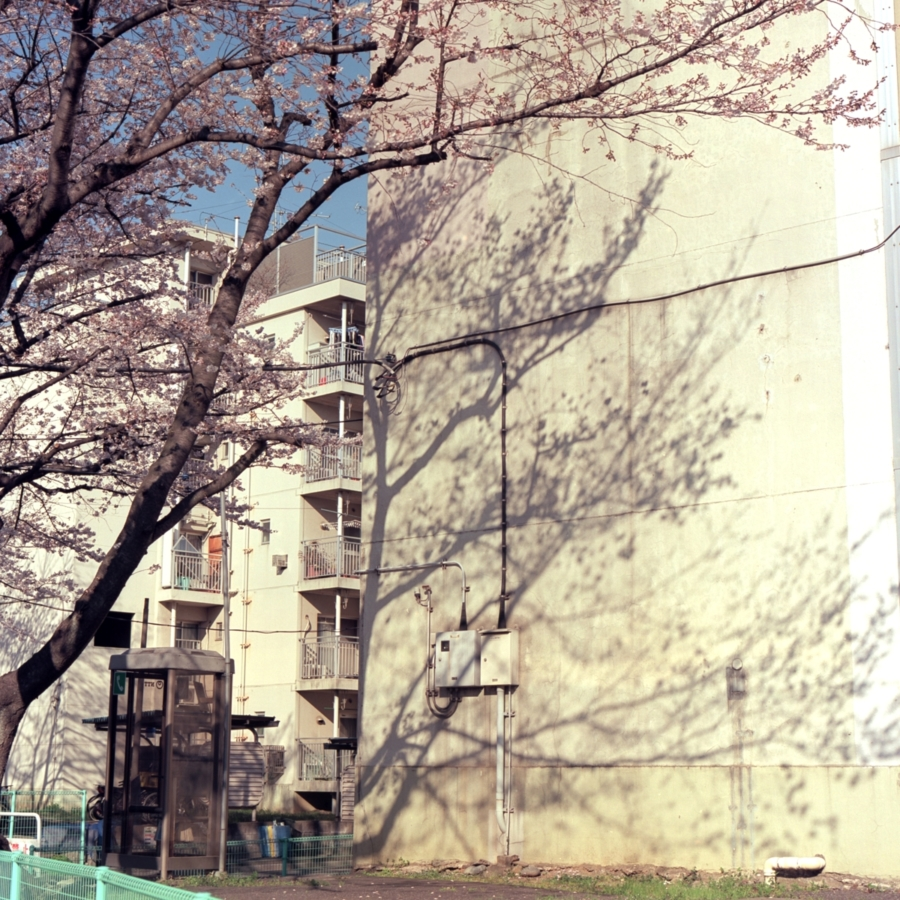 桜と団地に落ちる影