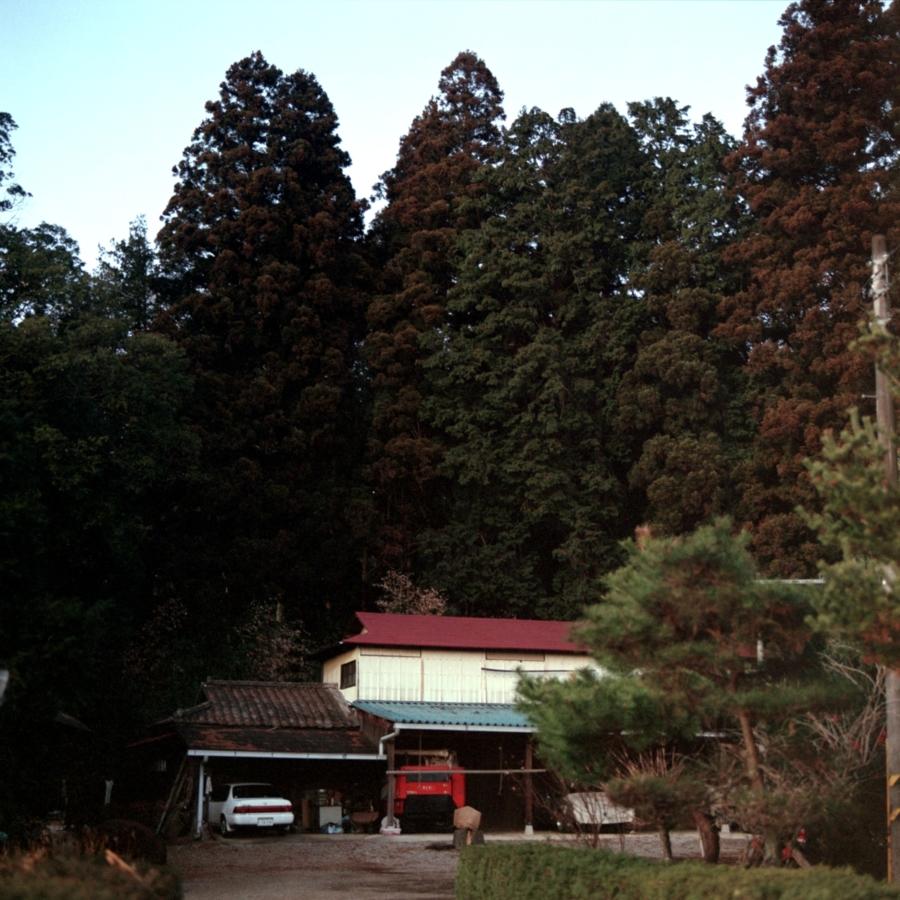 背の高い木々と雨屋