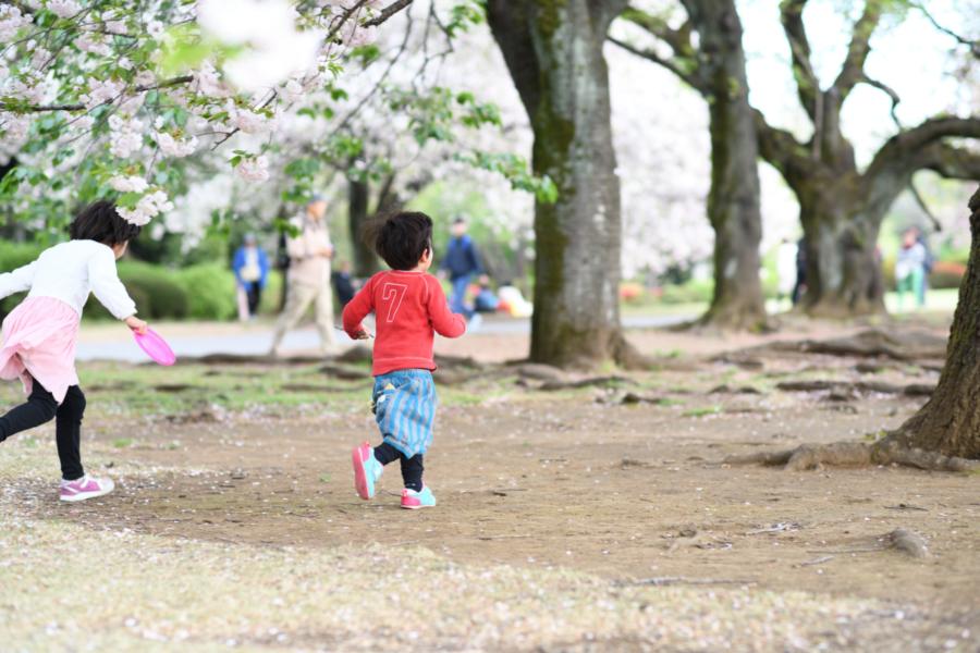 お花見で桜の周りを走る子どもたち