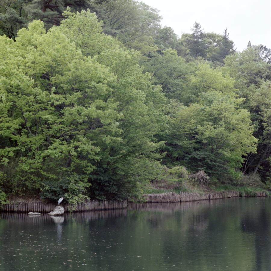 狭山公園 宅部池にいた鳥